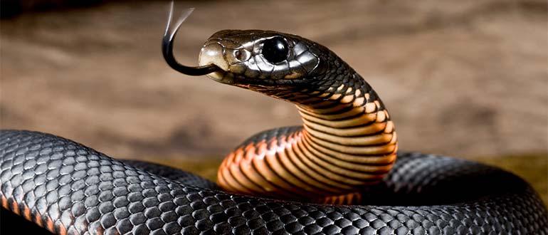 Sapņu tulks čūska