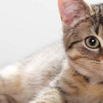 Sapņu tulks kaķis