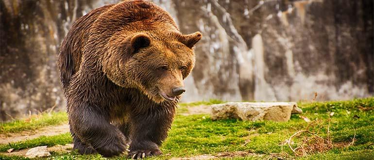 Sapņu tulks lācis
