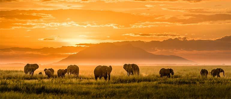 Sapņu tulks āfrika