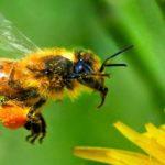 Sapņu tulks bites