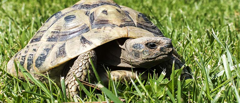 Sapņu tulks bruņurupucis