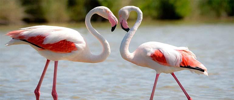 Sapņu tulks flamingo