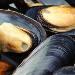 Sapņu tulks gliemenes