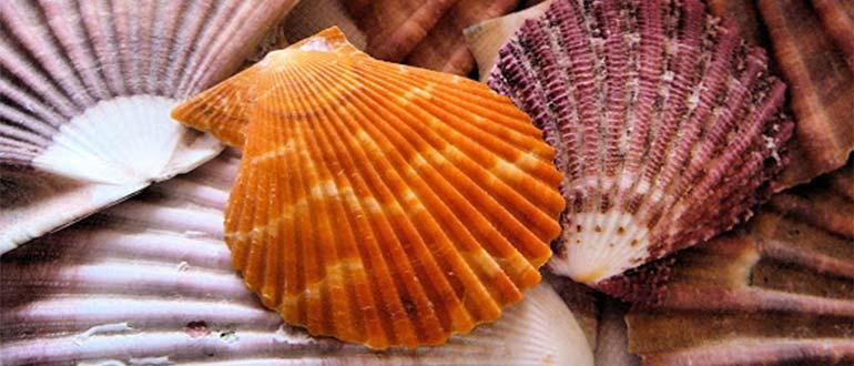 Sapņu tulks gliemežvāki
