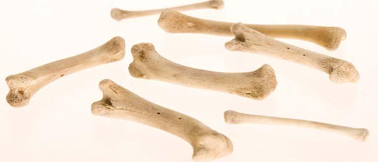 Sapņu tulks kauli