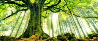 Sapņu tulks koki