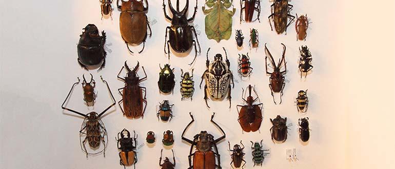 Sapņu tulks kukaiņi