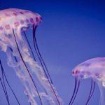 Sapņu tulks medūzas