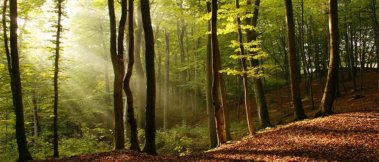Sapņu tulks mežs