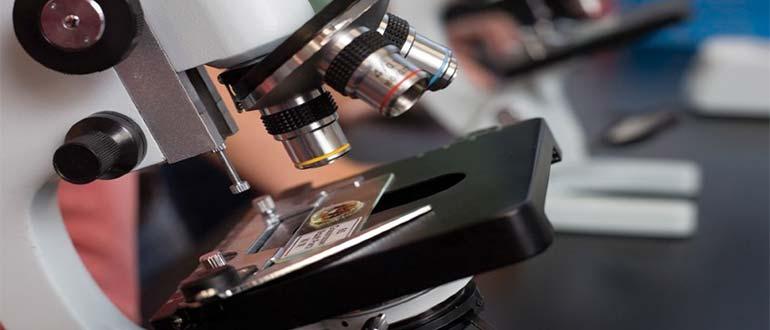 Sapņu tulks mikroskops