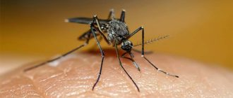 Sapņu tulks odi