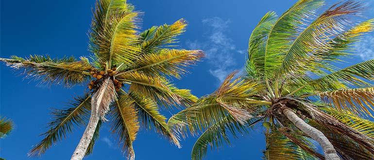 Sapņu tulks palma