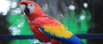Sapņu tulks papagailis