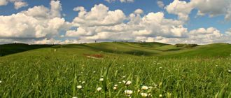 Sapņu tulks pļava