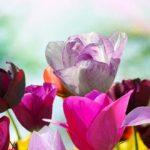 Sapņu tulks puķes