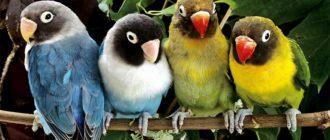 Sapņu tulks putni