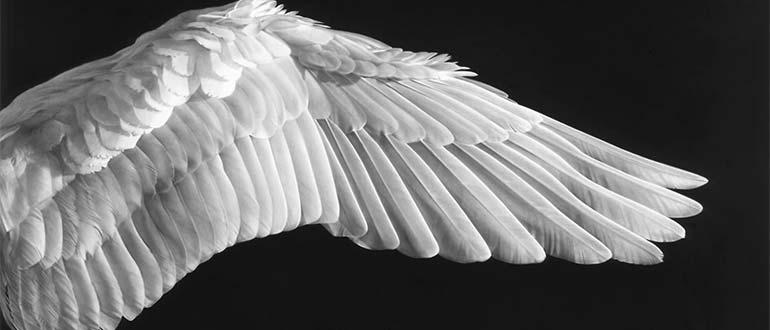 Sapņu tulks spārni