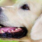 Sapņu tulks suns