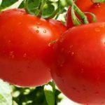 Sapņu tulks tomāti