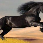 Sapņu tulks zirgs