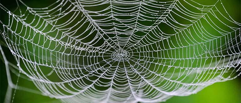 Sapņu tulks zirnekļa tīkls