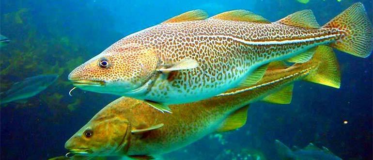 Sapņu tulks zivis